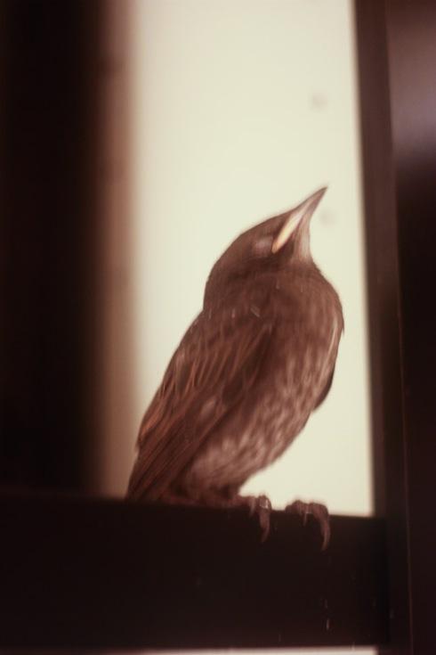 littlebird2_small-1