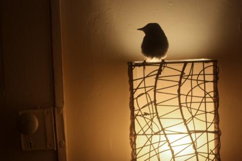 littlebird6-1